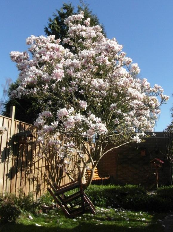 magnoliaboom2014