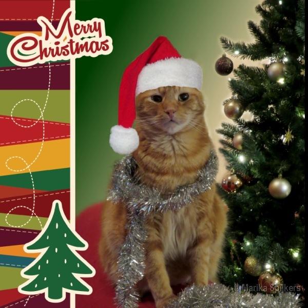 Fijne Kerstdagen Mariek Op De Kiek