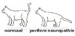 neuropathie-1